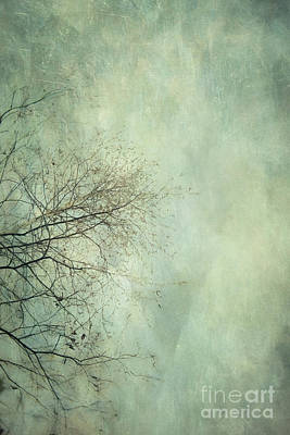 Photograph - Limbs Of A Tree 3 by Priska Wettstein