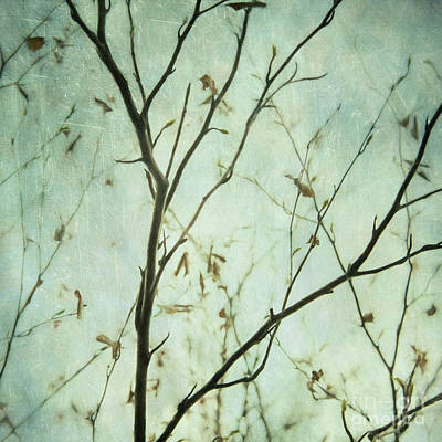 Photograph - Limbs Of A Tree 5 by Priska Wettstein