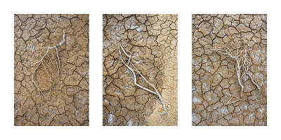 Photograph - Limbs Triptych by Alexander Kunz