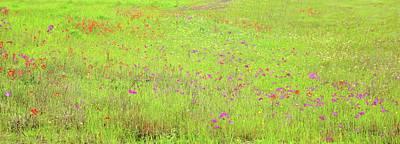 Digital Art - Lime And Hot Pink Field by Ellen Barron O'Reilly