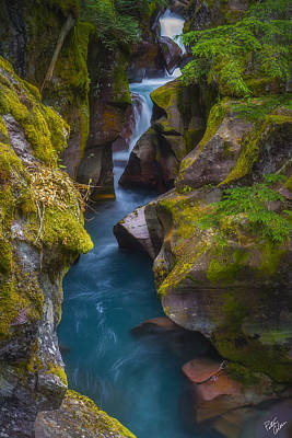 Peter James Nature Photograph - Lime And Teal by Peter Coskun