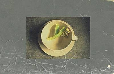 Photograph - Lime Tea by Marija Djedovic