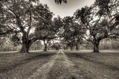 Limerick Plantation Live Oaks Original