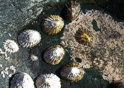 Digital Art - Limpets by Julian Perry