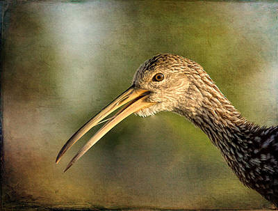 Photograph - Limpkin 1 by Richard Goldman