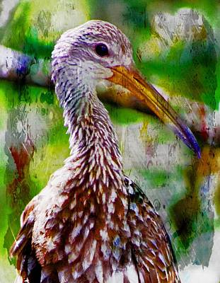 Photograph - Limpkin 1 by Sheri McLeroy