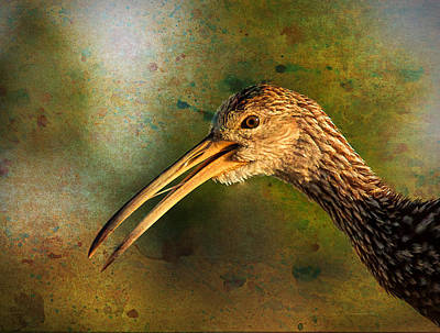 Photograph - Limpkin 2 by Richard Goldman