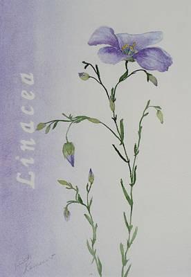 Linacea Art Print