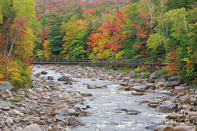 Photograph - Lincoln Woods Suspension Bridge - Lincoln, New Hampshire by Erin Paul Donovan