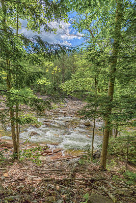 Photograph - Lincoln Woods Trail  by Brian MacLean