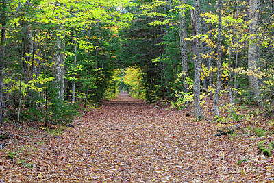 Photograph - Lincoln Woods Trail - Lincoln, New Hampshire by Erin Paul Donovan