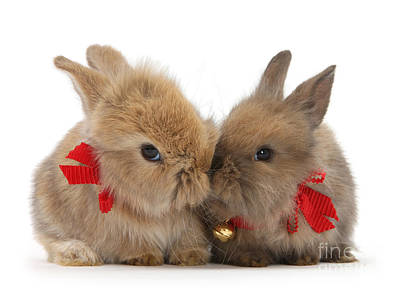 Photograph - Lindt Bunnies by Warren Photographic