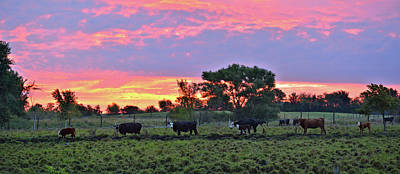 Photograph - Line Dancing Cattle by Bonfire Photography