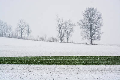 Photograph - Line In The Snow by Tana Reiff