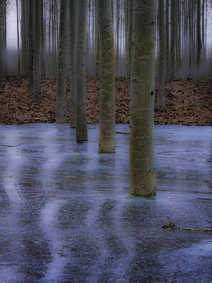 Photograph - Line Of Trees In Ice by Jean Noren