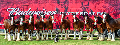 Draft Horses Photograph - Line-up Plus Clyde by Michelle Randolph