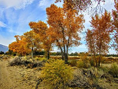 Photograph - Line Up To Fall by Marilyn Diaz