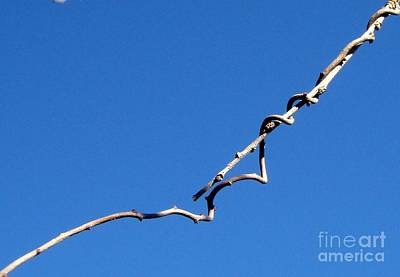 Art Print featuring the photograph Reach by Kristine Nora