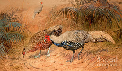 Pheasant Wall Art - Painting - Lineated Kaleege by Joseph Wolf
