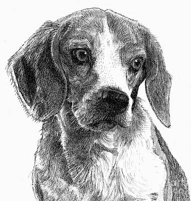Drawing - Lined Dog by Dave Luebbert