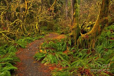 Photograph - Lined With Ferns by Adam Jewell