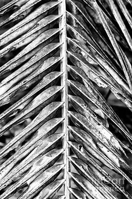 Photograph - Lines At Isla Zapatillas Panama by John Rizzuto