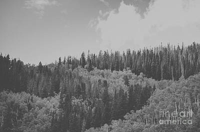 Lines In The Pines Bw Print by Victoria Lawrence