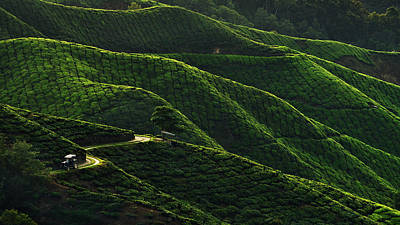 Plantations Photograph - Lines by Jordan Lye