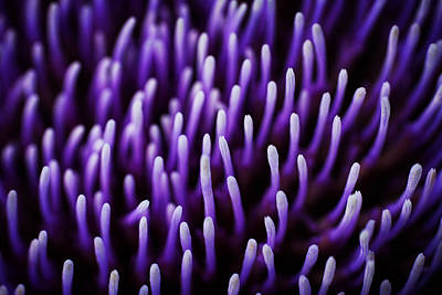 Artichoke Photograph - Lines by Zoltan Toth