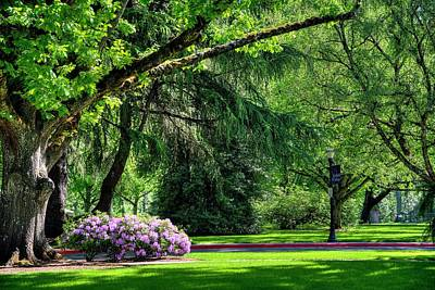 Photograph - Linfield Shade by Jerry Sodorff