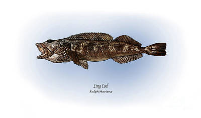 Angling Painting - Ling Cod by Ralph Martens
