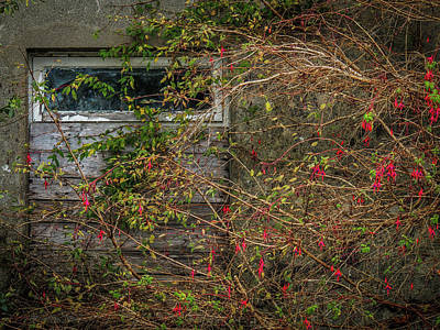 Photograph - Lingering Blooms In Autumn by James Truett