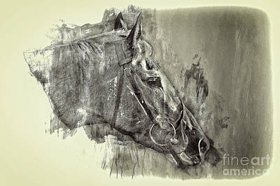 Photograph - Lingfield Thoroughbred by Jack Torcello