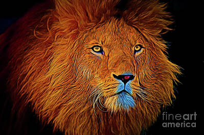 Photograph - Lion 16218 by Ray Shrewsberry