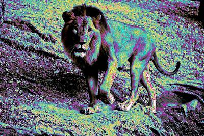 Photograph - Lion-2 by Anand Swaroop Manchiraju