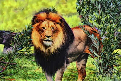 Photograph - Lion 21118 by Ray Shrewsberry