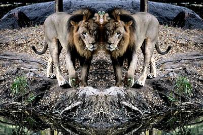 Photograph - Lion-3 by Anand Swaroop Manchiraju
