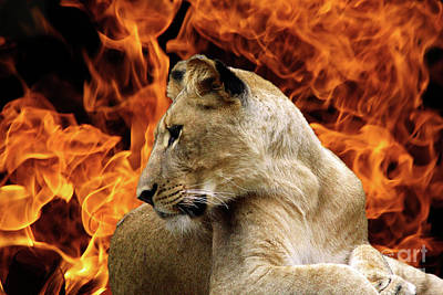 Photograph - Lion And Fire by Inspirational Photo Creations Audrey Woods