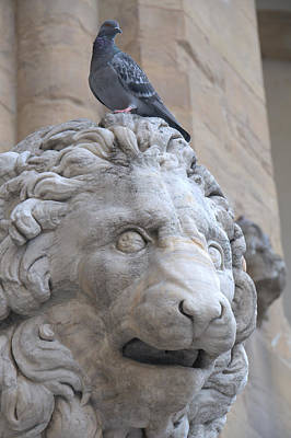 Photograph - Lion And Pigeon by Caroline Stella