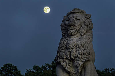 Photograph - Lion And The Moon by Jerry Gammon
