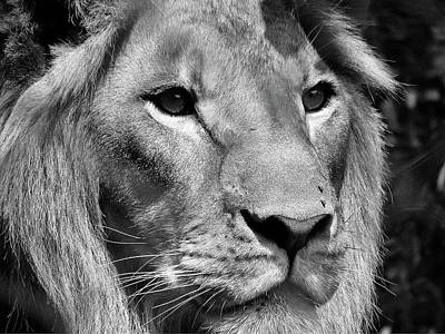Africa Photograph - Lion Black And White by Irene Jonker