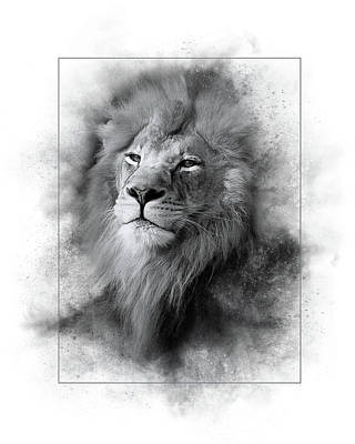 Photograph - Lion Black White by Marty Maynard