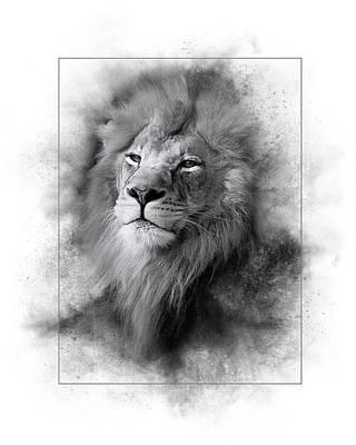 Photograph - Lion Black White by Marty Maynard