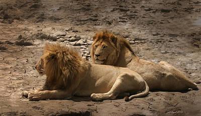 Lion Brothers Art Print by Joseph G Holland