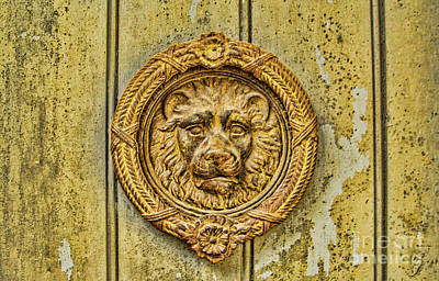 Photograph - Lion Decor by Steven Parker
