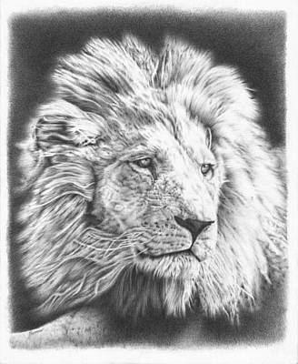 Animals Drawings - Fluffy Lion by Casey
