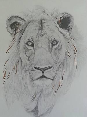 Animals Drawings - Lion by Elizabeth Waitinas