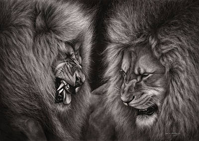 Lion Fight Art Print