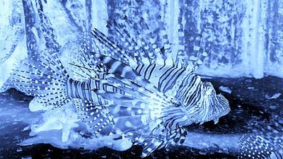 Photograph - Lion Fish Cyan Negative by Rob Hans