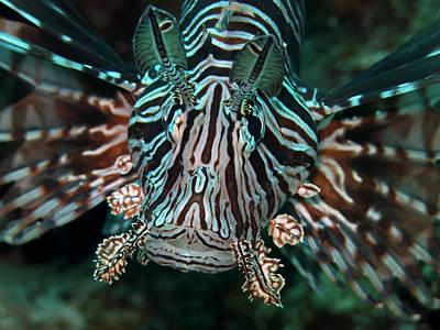 Photograph - Lion Fish Portrait by Mau Riquelme